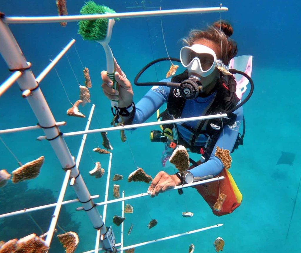 The case for coral nurseries in Roatan