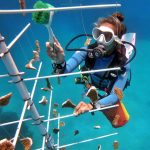 Read More: The case for coral nurseries in Roatan
