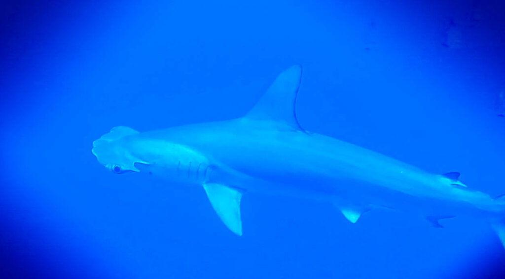 Shark! Your sighting can help science
